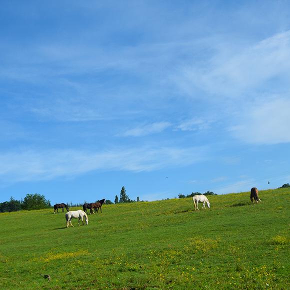 Pensions pour chevaux Ecurie de Toulos